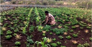 How rural women can become Papua New Guinea's agribusiness entrepreneurs