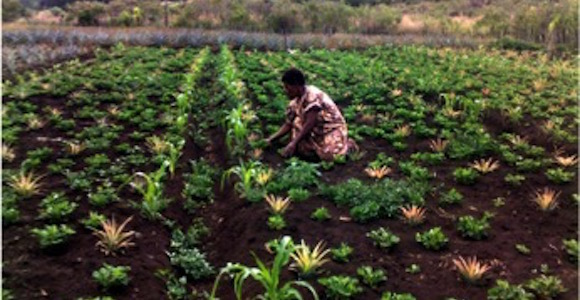 Win PNGomen are changing rural agri-business
