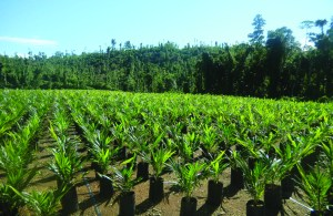 R H Group's Sigite Markus oil palm project in East New Britain