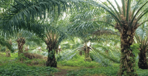 New Britain Palm Oil looking to expand and diversify, says Country Manager