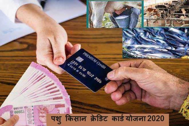 Animal farmer credit card scheme 2020