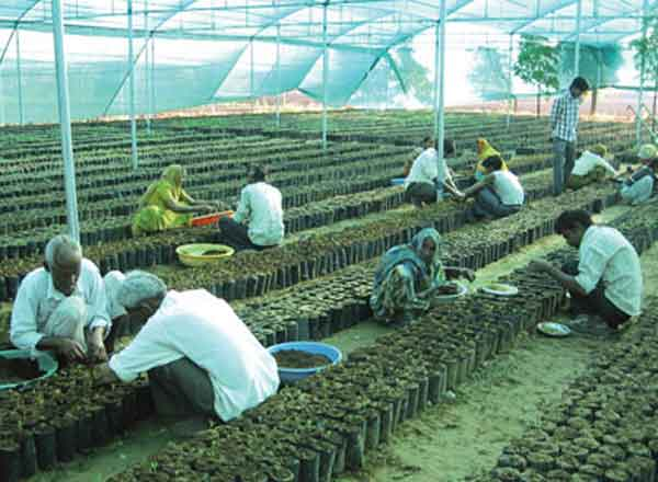 Agriculture Success Story of Sandalwood farmer Alpesh patel