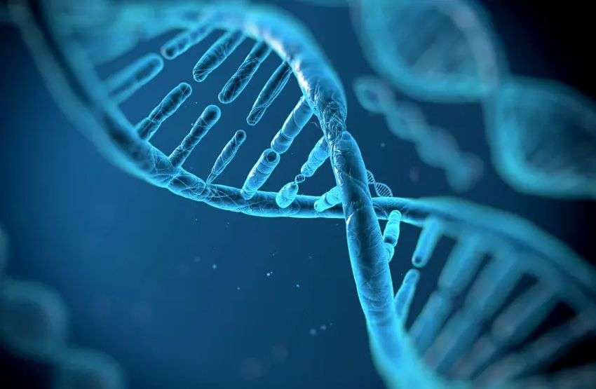 Medical science: genetically designed fat cells will fight obesity