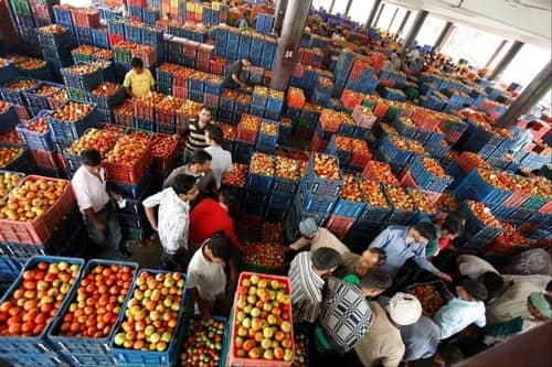 Start a Vegetable Wholesale Company