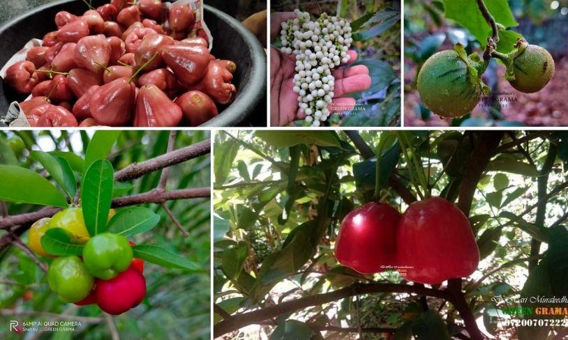 Exotic Fruits Farming
