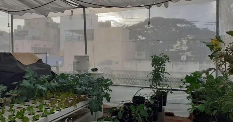 Hydroponic And Aquaponic Farming