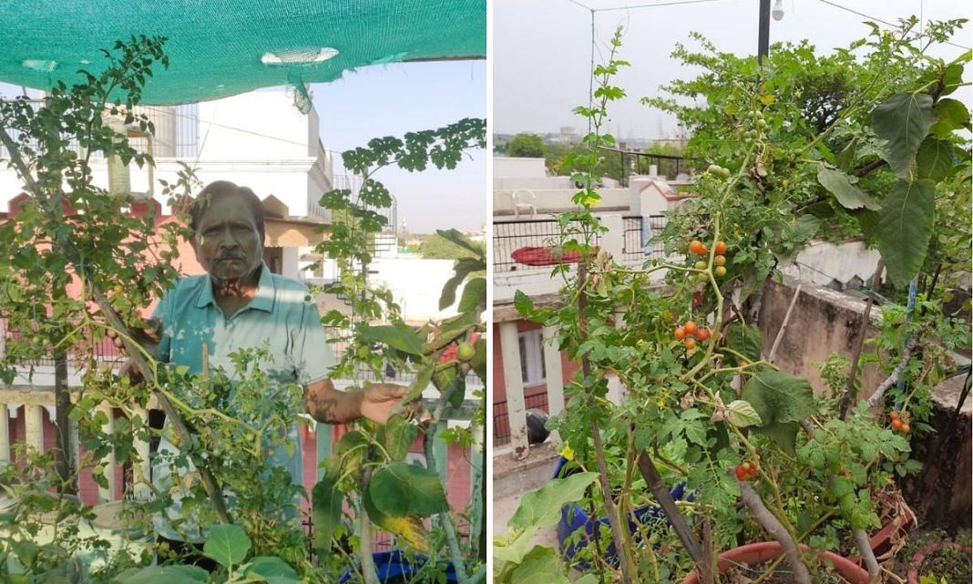 ड्रैगन फ्रूट, इंसुलिन, कॉफी और मुलैठी तक उगाते हैं छत पर, बाजार से खरीदते हैं सिर्फ आलू