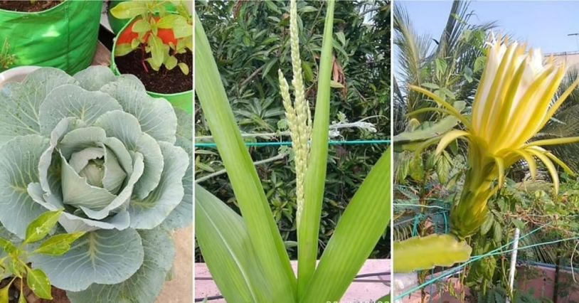Terrace Gardening In Chennai