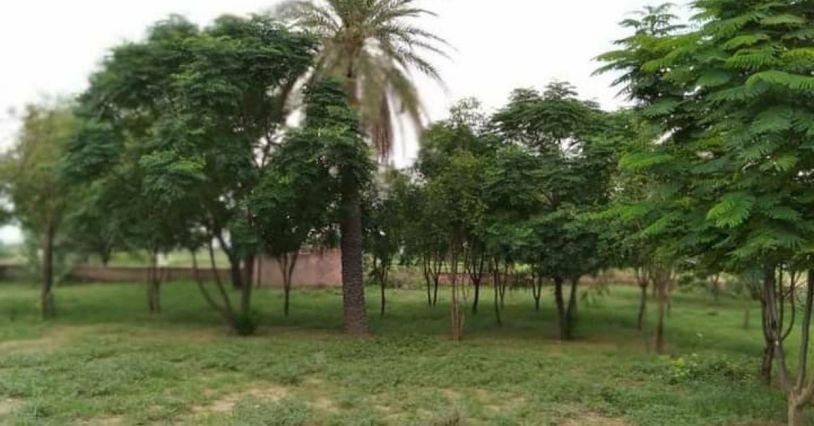 rajasthan tree woman