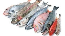 Photo of High levels of arsenic in seafood are worrisome; studies show even harmless forms of chemical may be toxic