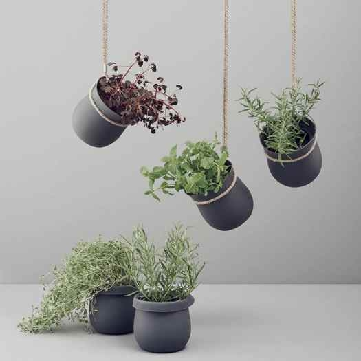 ceiling mounts to hang plants