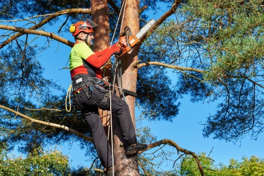 arborist ac76cec7