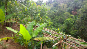 agro-forestry-project