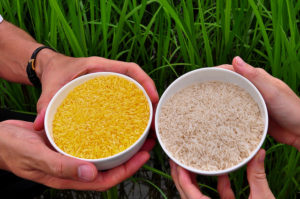 gm-rice-nigeria