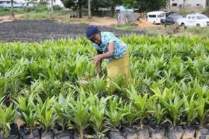 palm-production