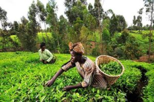 FG Plans Lucrative Business Employment in Agriculture