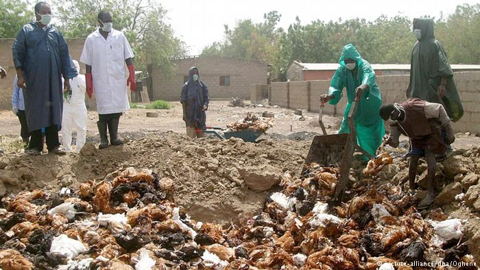Zimbabwe bans South African poultry after avian flu outbreak - state paper
