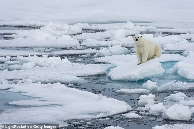 According to the U.N. a drastic temperature shift further imperiling Arctic ice is 'locked in""