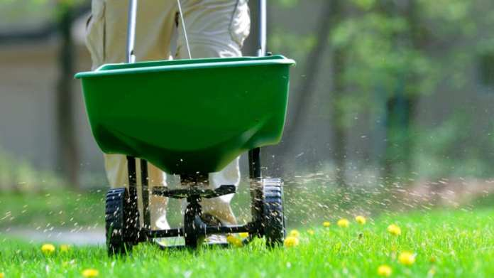 fertilizing-lawn