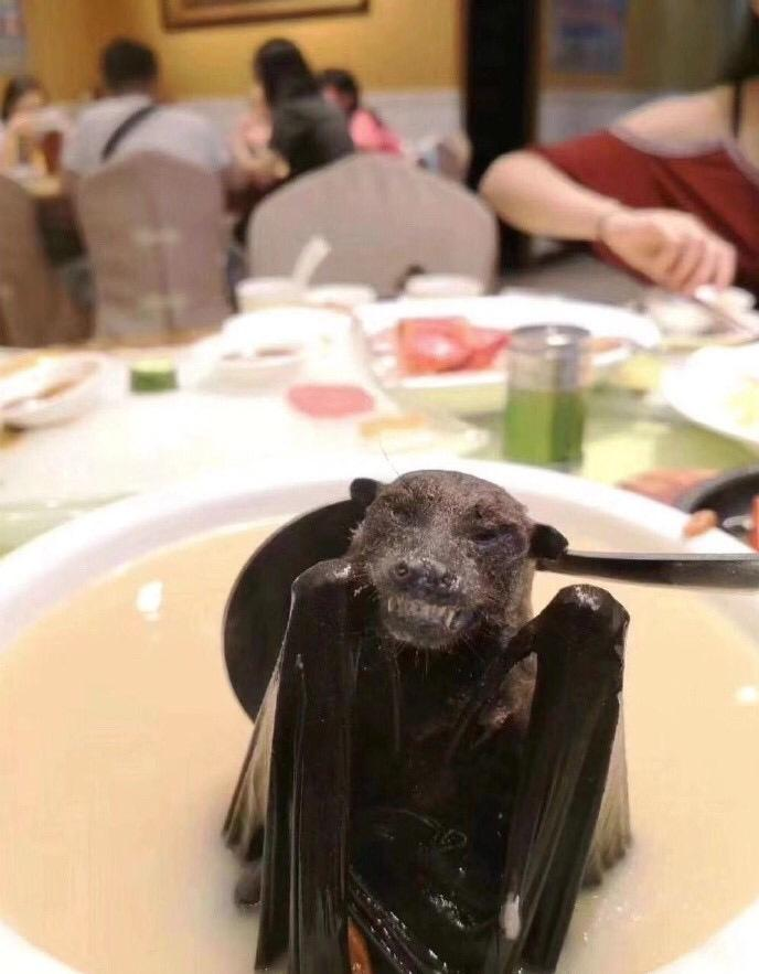 Footage has been shared on social media of people eating bat soup - scientists have claimed the virus may have been spread by the flying mammal