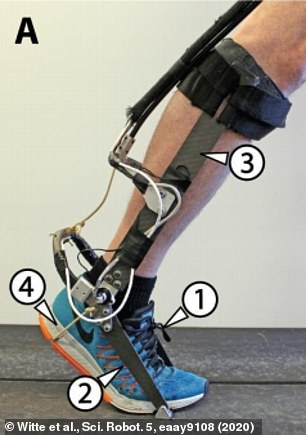 The shoe, toe struts, calf struts and heel rope all help power the device and make it easier to run