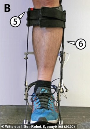 Front view of one of the exoskeleton models. The fit around the calf can be adapted for comfort