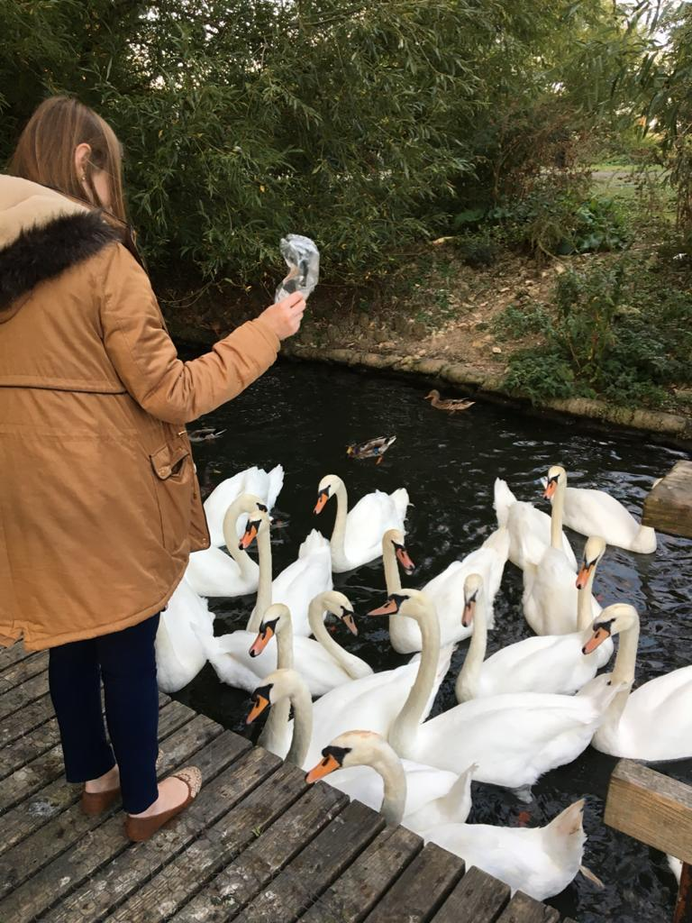 Thayse, 29, was feeding the swans when her new iPhone fell out of her pocket in early February