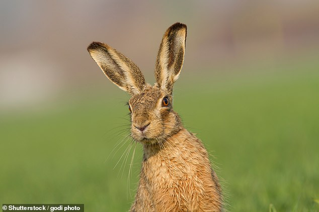 The team also wanted to find out exactly how the originally non-native species became incorporated into modern British Easter traditions. Stock image