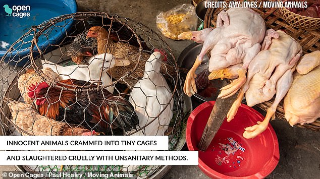 Chickens and ducks were seen crammed inside a cage next to the corpses of other ducks