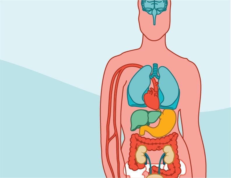 Effects of Sildenafil on Human Heart