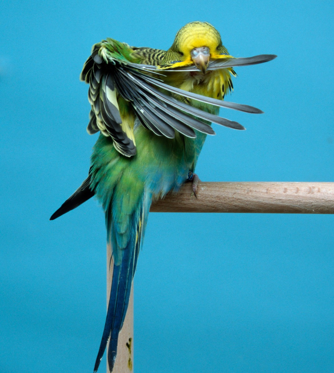 Our vet Sean McCormack gives his advice to a reader whose bird is losing feathers and 'looks a right state'