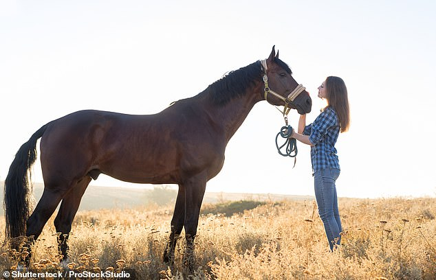 While the horse did show a reduced heart rate and some attachment behaviours, similar to a dog, it was irrespective of the human - not just for their owner. Stock image