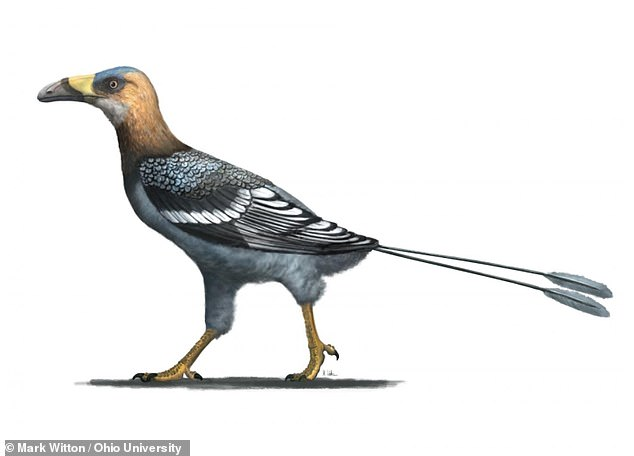 A bird the size of a crow that flew 68 million years ago and looked like a miniature toucan has been discovered in Madagascar. Dubbed Falcatakely, meaning 'small scythe beak', it had a curved and elongated bill. pictured, artist's impression