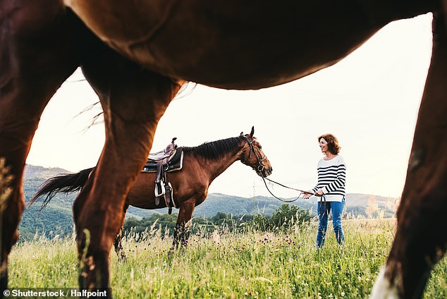 Horses think of humans as a 'safe haven' but don't form attachment bonds with their owners - despite what equine enthusiasts might think, study reveals. Stock image