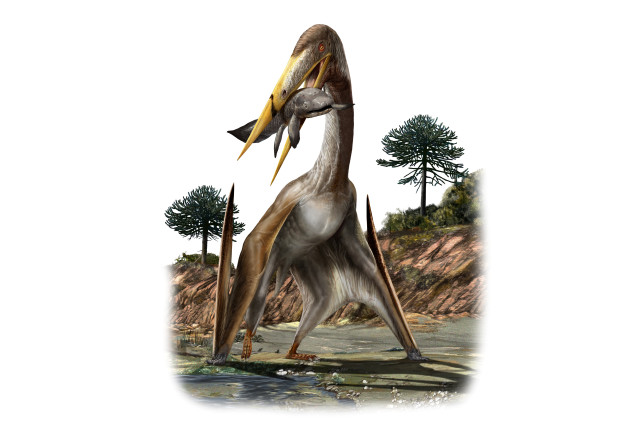 Dinosaur pterosaur long neck