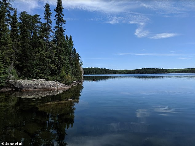 Lake Nydia inOntario, Canada. Study author Kevin Rose said 'the implications of declining oxygen in freshwaters are enormous'