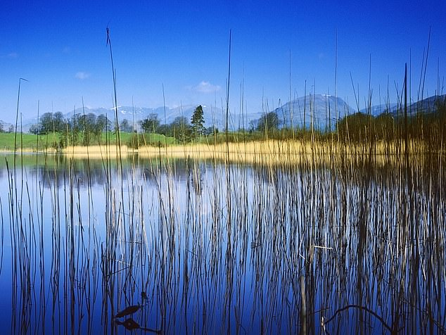 Blelham Tarn in the north of England. Researchers used 30 years of data from the lake (collected between 1972 and 2016)