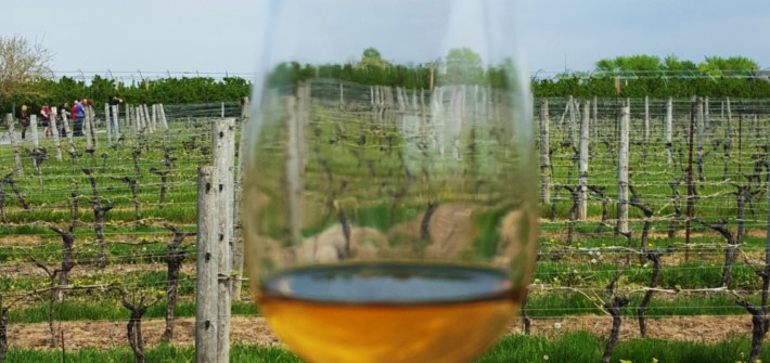 Appreciating Wine: Winery Tour at Niagara-on-the-Lake Trius Winery
