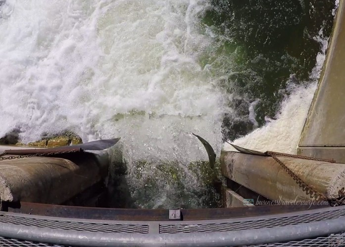 Amazing Salmons Fight Their Way Up the River of Port Hope for the Annual Salmon Run Corbett's Dam Fish Ladder Fishing Port Hope Ganaraska River Salmon Run