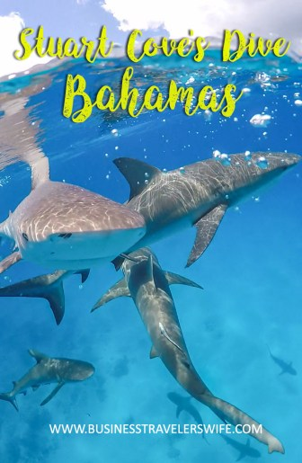 Amazing Snorkeling Tour with Stuart Cove's Dive Bahamas Reef Sharks