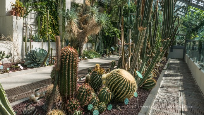 Experiencing the Best of Madrid in a Day - Explore, Eat, Stay Real Jardin Botanico cactus