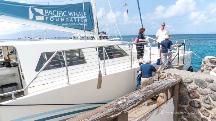 10 Things to Know Before You Go Whale Watching in Maui Pacific Whale Foundation