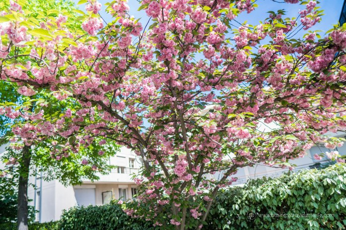 Beautiful Sights in Paris You Shouldn't Miss Promenade Plantee Cherry Blossoms
