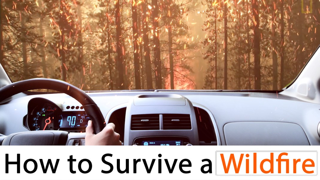 How to survive wildfires