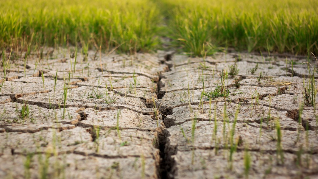 Soil Degradation and its repercussions on the environment featured