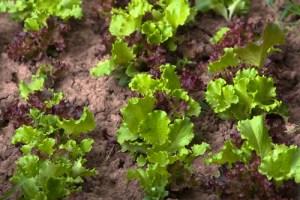 Blanket the soil