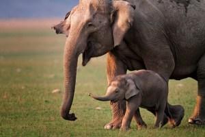 most endangered species