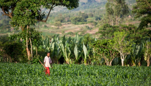 ADDIS ABABA, Ethiopia--Information technology is being utilised more than ever to improve agriculture in East Africa.