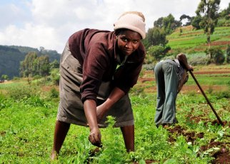 EAC small scale farmers to Benefit from a $5m capital loan: Small scale farmers from the East African Community will have reason to smile after Calvert Impact Capital
