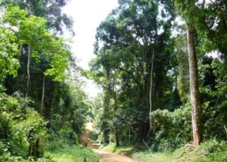 Bugoma Central Forest Reserve in Hoima District